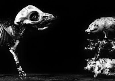 Form of Animals 03